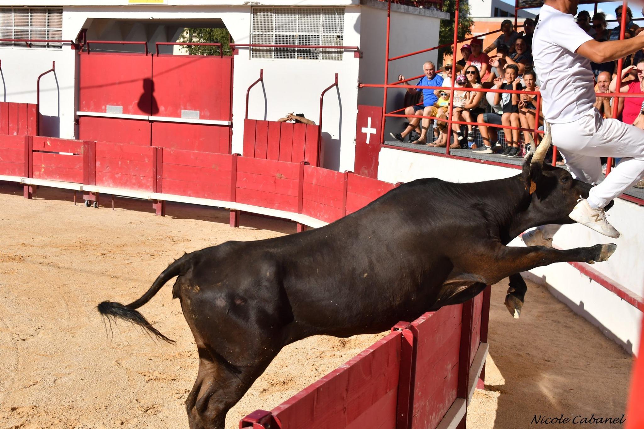Mamille vache manade Chaballier coup de barrière raseteur arènes tradition raseteur