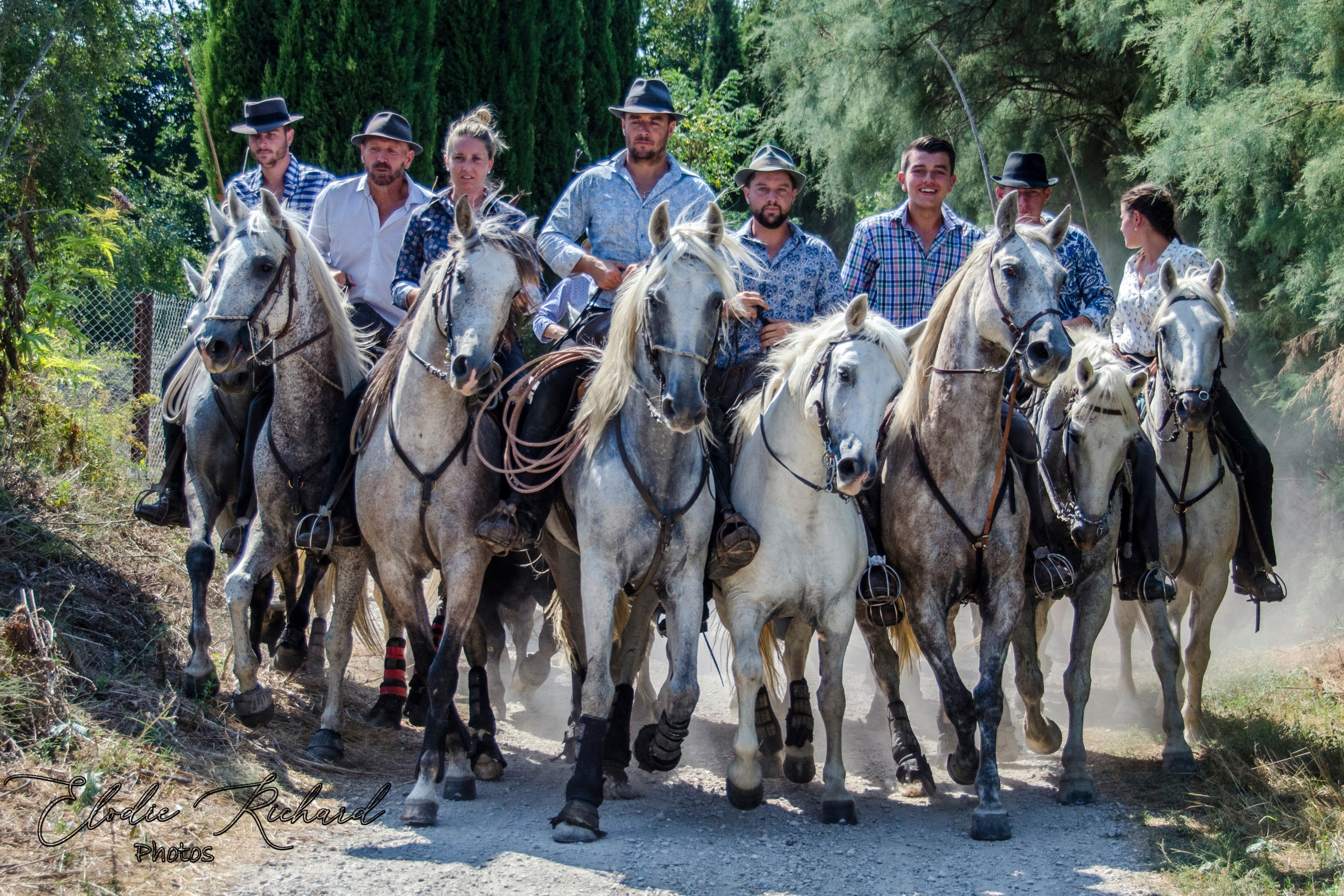 gardians cheval taureaux camargue abrivado tradition